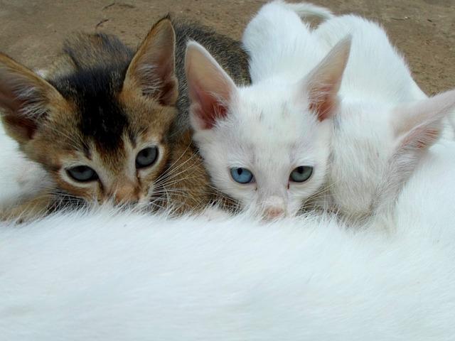 Tri malé mačatá.jpg