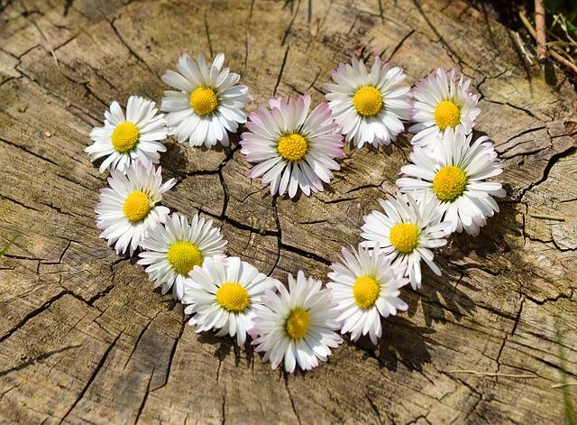 srdce z kvetín.jpg