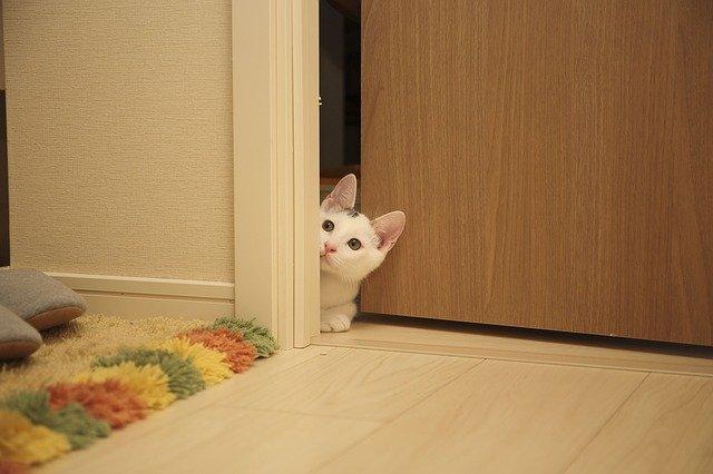 Interiér, mačka vo dverách.jpg