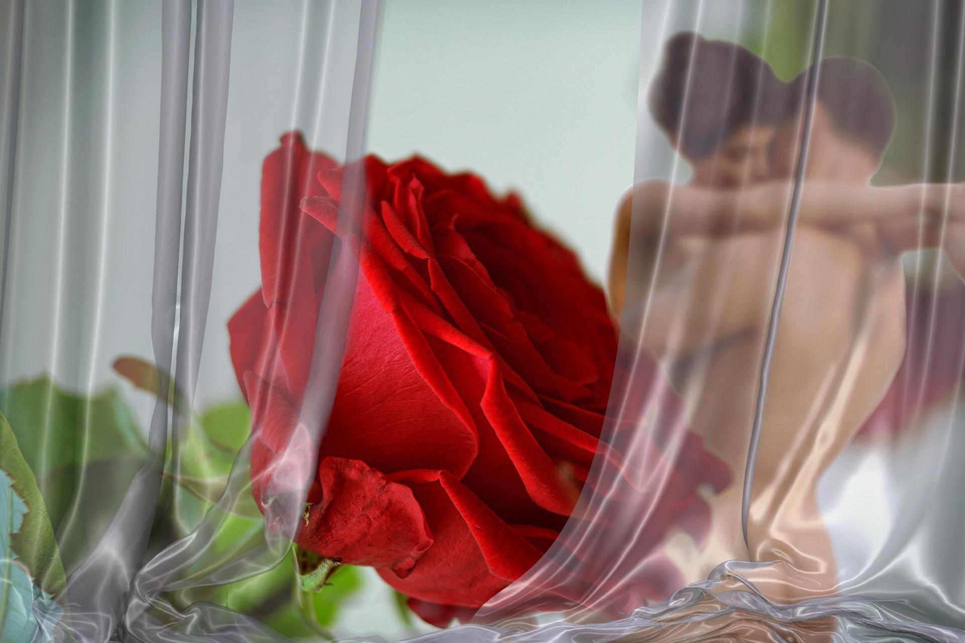 rose-2717785_1920